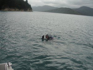 Potapljanje v Marlborough Sounds